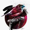 Bird I Limed Edition Print